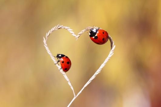 iubire-1